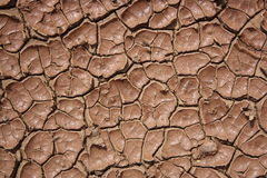 Cracked and dried mud Royalty Free Stock Image