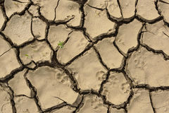 Cracked drought muddy soil. Concept of ecological catastrophe an Royalty Free Stock Photography