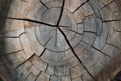 Cracked dry cut of old wood stock photography
