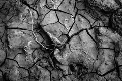 Cracked dry earth. Sign of drought and climate change Stock Photos