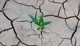 Cracked dry earth and a green lonely plant that breaks through the crack.  stock images