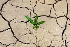 Cracked dry earth and a green lonely plant that breaks through the crack. Ecological and climatic problems.  royalty free stock images