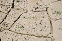Cracked dry earth with lonely grass in the bright light Royalty Free Stock Images