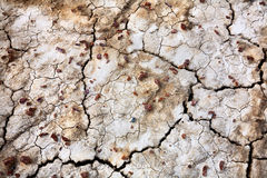 Cracked dry ground  texture Royalty Free Stock Image