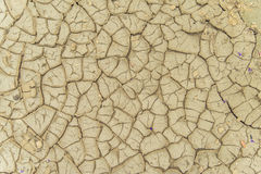 Cracked dry land in a desert Stock Photos