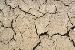 Cracked dry land in a desert Stock Image