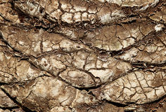 Cracked, dry layer of the earth's surface Royalty Free Stock Photo