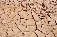 Cracked dry mud Stock Photography