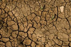 Cracked dry soil Stock Image