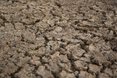Cracked dry soil Royalty Free Stock Photo