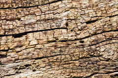 Cracked Dry Wooden Texture Royalty Free Stock Photography