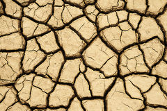 Cracked earth Stock Image