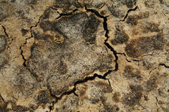 Cracked earth background Stock Photo