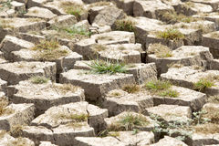 Cracked earth and barren Stock Photo