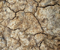 Cracked earth close up Royalty Free Stock Photo