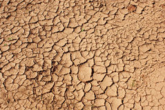 Cracked earth. Dehydrated earth in hot summer day Stock Images