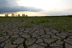 Cracked earth from drought Stock Photo