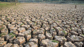 Cracked earth,Drought,Dry land,Dry tree,Dry Dam. Royalty Free Stock Images