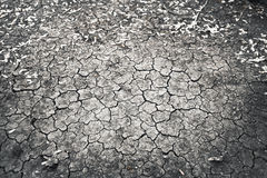 Cracked earth. Drought in summer only Stock Photography