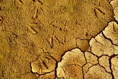 Cracked earth. The dry cracked earth on the field with traces of birds Stock Image