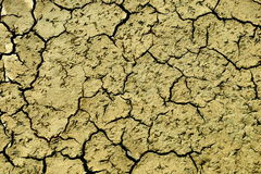 Cracked earth. The dry cracked earth on the field with traces of birds Royalty Free Stock Images