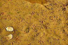 Cracked earth. The dry cracked earth on the field with traces of birds Stock Photography