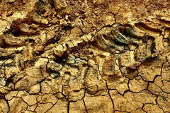 Cracked earth. The dry cracked earth on the field with tractor tracks Stock Photo