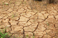 The cracked earth. And the dry grass Stock Image