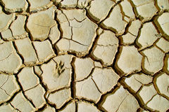 Cracked earth. Dry cracked earth texture background Royalty Free Stock Image