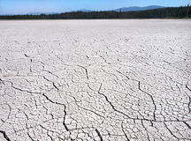 Cracked earth due to drought in the wilderness of British Columbia, Canada Royalty Free Stock Photography
