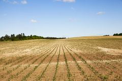 Cracked earth in the field Stock Image