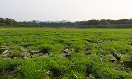 Cracked earth  and grassland Royalty Free Stock Photos