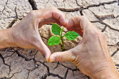 Cracked earth. Hands forming a heart shape around a tree growing on cracked ground /hands growing tree / save the world / environmental problems / growing tree stock images