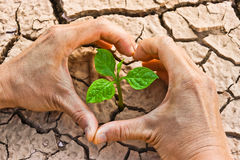 Cracked earth. Hands forming a heart shape around a tree growing on cracked ground /hands growing tree / save the world / environmental problems / growing tree stock photography