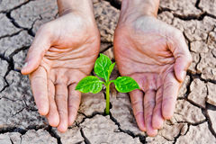 Cracked earth. Hands holding tree growing on cracked earth /hands growing tree / save the world / environmental problems / cut tree royalty free stock photos