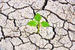 Cracked earth. Hands holding tree growing on cracked earth /hands growing tree / save the world / environmental problems / love nature / heal the world / cut stock photos
