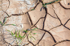 Cracked earth from heat Royalty Free Stock Photos