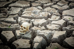 Cracked earth and human skull Stock Image