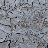 Cracked earth Royalty Free Stock Photos