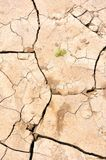 Cracked Earth & New Life Royalty Free Stock Photography