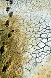 Cracked earth. saline, salt-marsh. texture. Land prone to erosion royalty free stock images