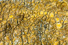 cracked earth. saline, salt-marsh. texture stock photography