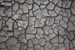 Cracked earth at spring. Background and texture. Stock Photography