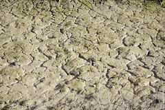 Cracked earth sunny Royalty Free Stock Images