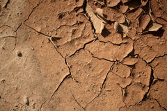 Cracked earth texture Stock Photo