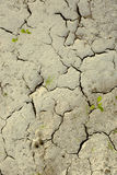 Cracked earth texture or background. Cracked dry mud earth texture or background stock photos