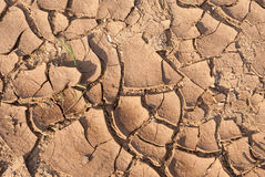 Cracked earth texture. With the green grass royalty free stock photography