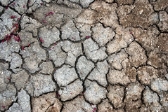 Cracked earth texture Royalty Free Stock Images