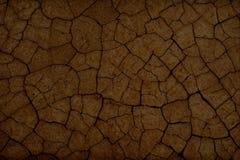 Cracked earth texture Royalty Free Stock Photos
