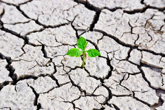 Cracked earth. Tree growing on cracked ground /hands growing tree / save the world / environmental problems / growing tree / csr stock photography